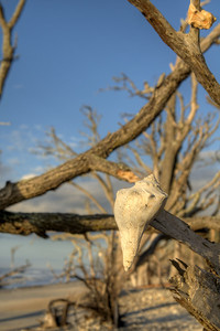 Dozens of seashells hang from branches of deadwood trees at Botany Bay Plantation Heritage Preserve and Wildlife Management Area in Edisto Beach, SC on Friday, August 29, 2014. Copyright 2014 Jason Barnette