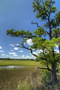 The view of low-lying marshes along the History Trail at Charles Towne Landing State Historic Park in Charleston, SC on Wednesday, September 3, 2014. Copyright 2014 Jason Barnette