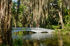 Magnolia Plantation and Gardens in Charleston, South Carolina