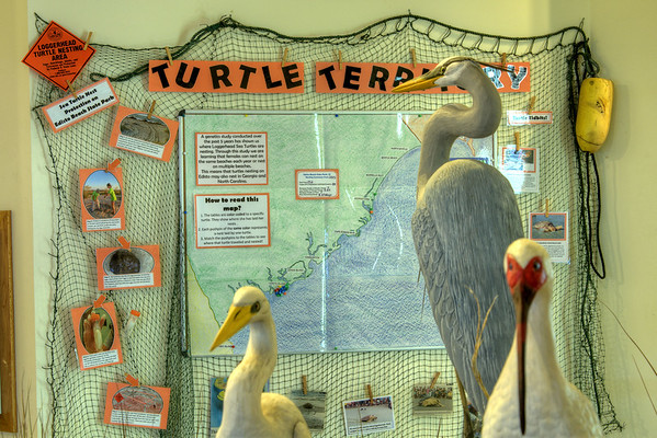 Stuffed animals and informative boards inside the Environmental Learning Center in Edisto Beach State Park in Edisto Beach, SC on Friday, August 29, 2014. Copyright 2014 Jason Barnette
