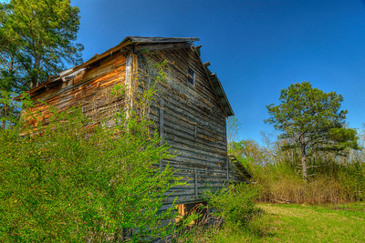An old tobacco barn in Galivants Ferry, SC on Monday, March 26, 2012. Copyright 2012 Jason Barnette