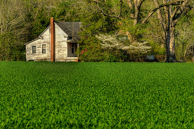 An old farmhouse in Galivants Ferry, SC on Monday, March 26, 2012. Copyright 2012 Jason Barnette