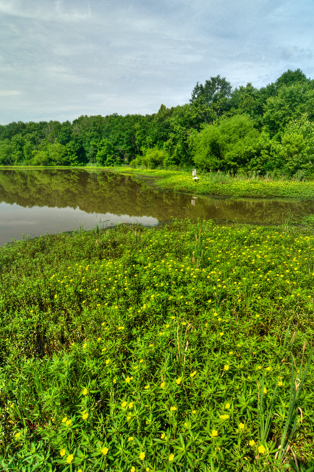 Lake Conestee Nature Park in Greenville, SC