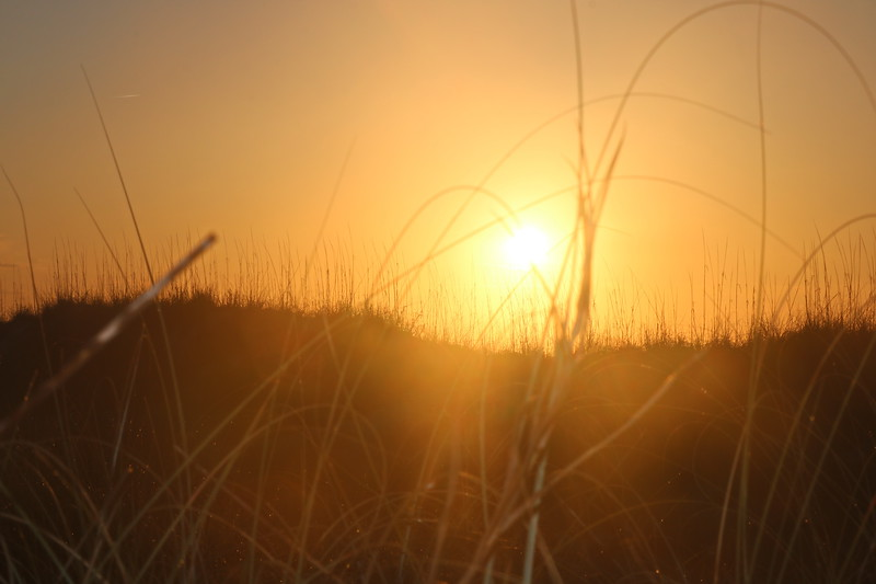 Dune Grasses at Sunrise