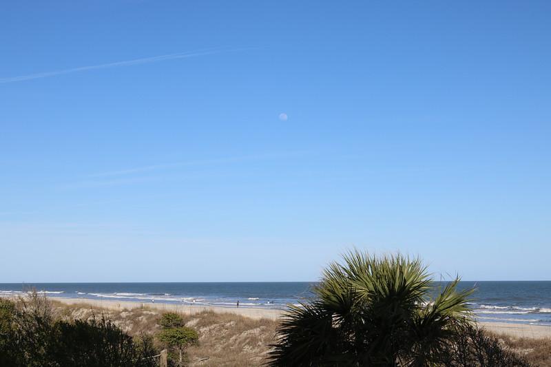 Sand Dune Plants