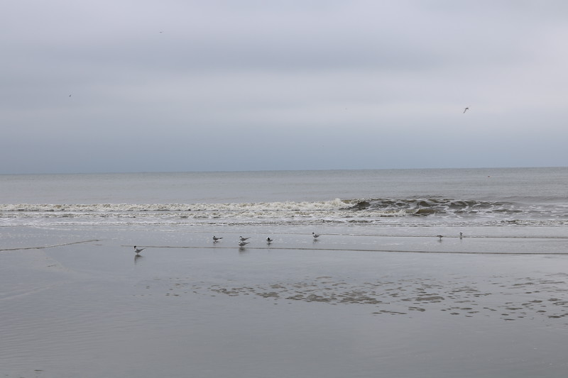 Seagulls in the Surf