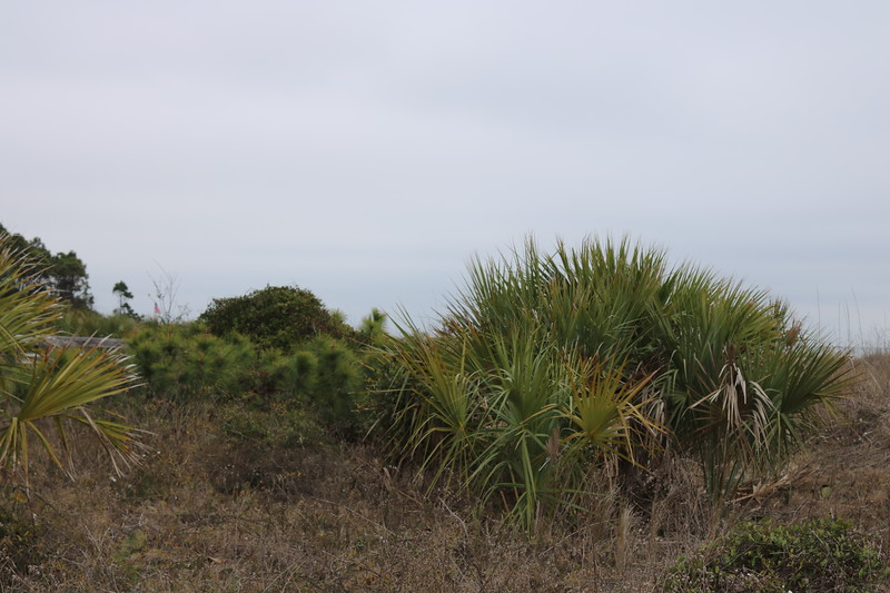 Vegetation Stabilizes the Sand Dunes