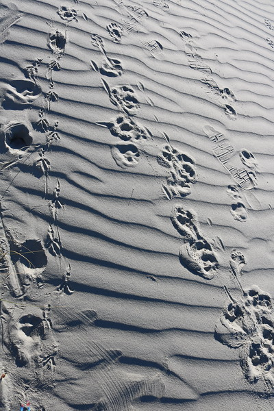 Shoe Prints in the Sand