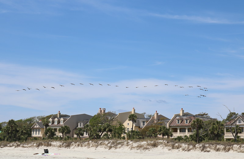 Pelicans Align over Beach Houses