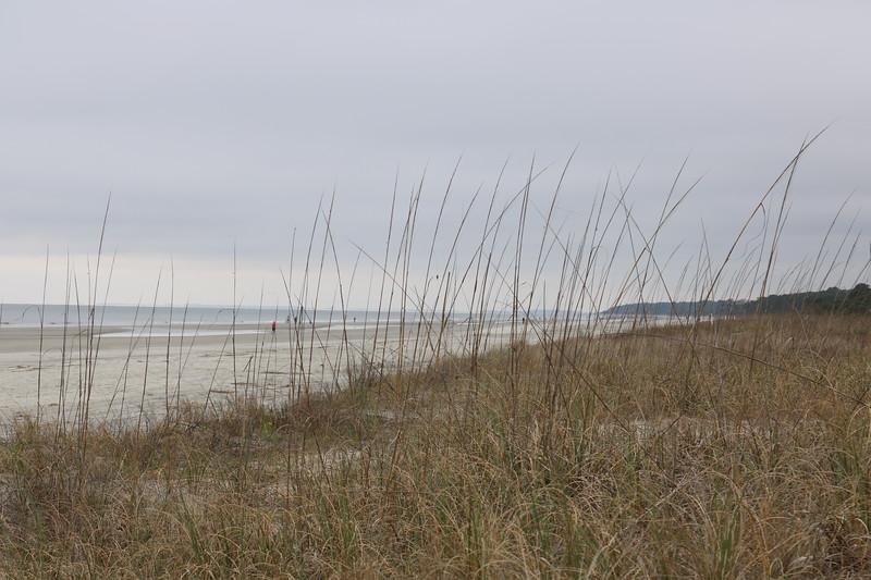 Sannd Dunes at the Beach