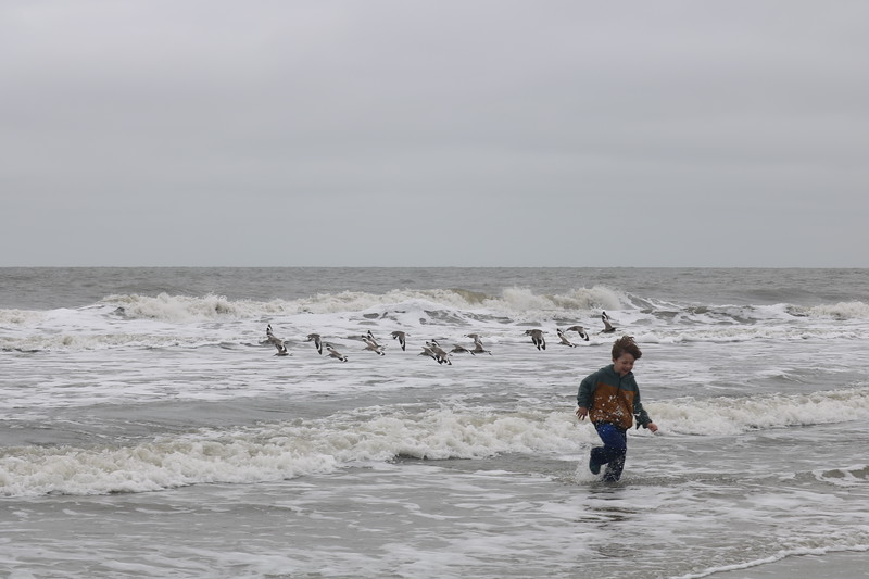 Running in the Surf as Pelicans Fly By