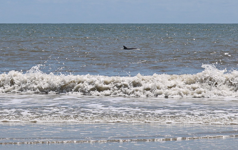 Dolphin at the Shore
