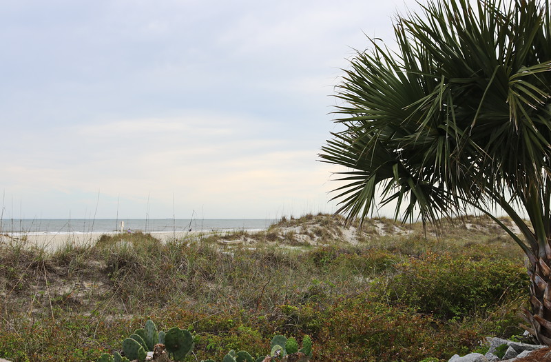 Fan Palm and Cactus on the Sand Dunes