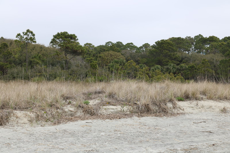 Sand Dunes at Coligny Beach