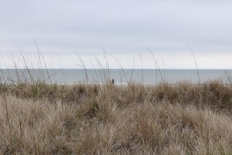 Sand Dunes Grasses