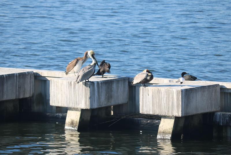 Sea Birds on the Jetty