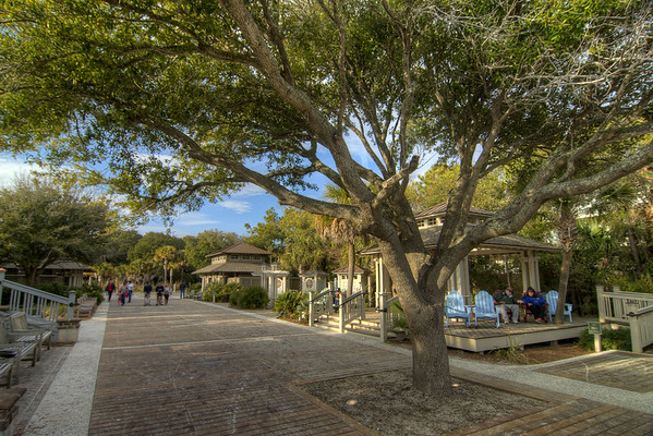 A sprawling tree provides some shade at Coligny Beach Park in Hilton Head Island, SC on Sunday, February 22, 2015. Copyright 2015 Jason Barnette