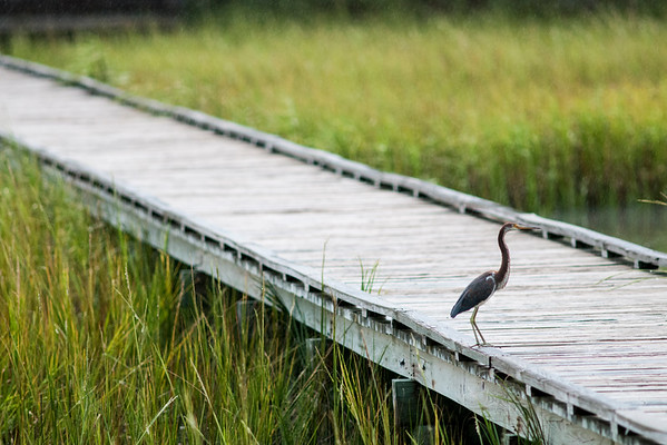 The Marsh Boardwalk at Hunting Island State Park