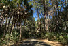 One of the many one-lane roads through the park surrounded by beautiful scenery of coastal trees at Hunting Island State Park in Hunting Island, SC on Friday, February 20, 2015. Copyright 2015 Jason Barnette