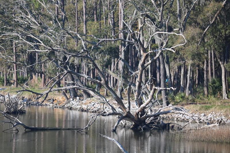 Dead Tree Habitat