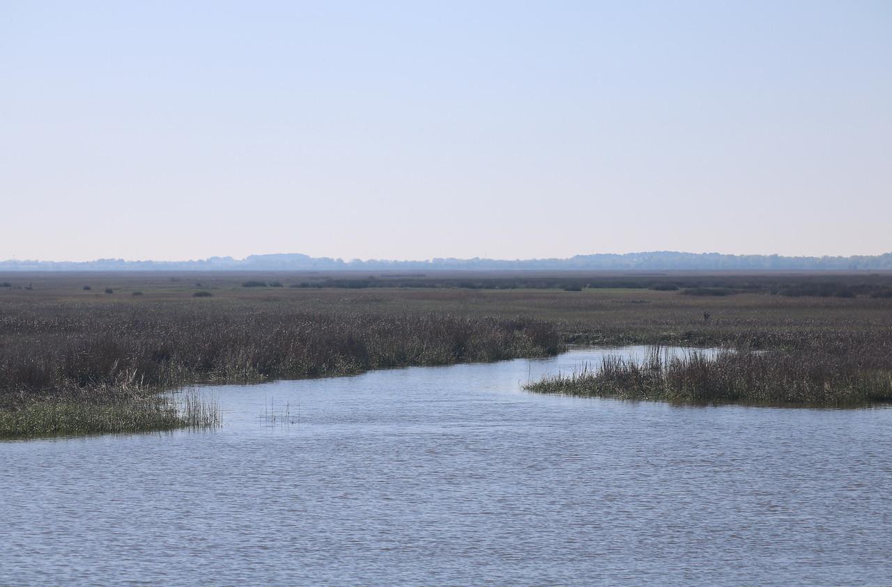 Salt Marsh Flow Channel