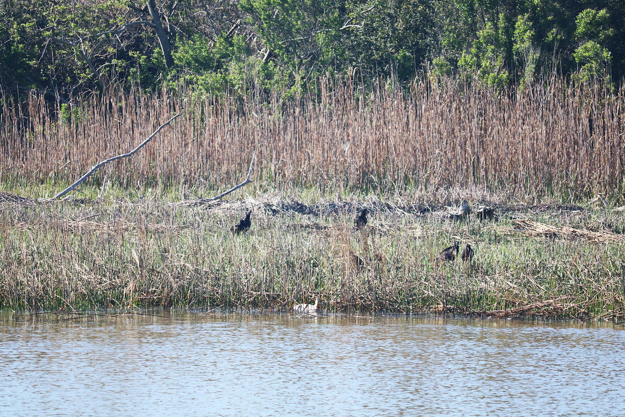 Birds in the Grass along the Intracoastal Waterway