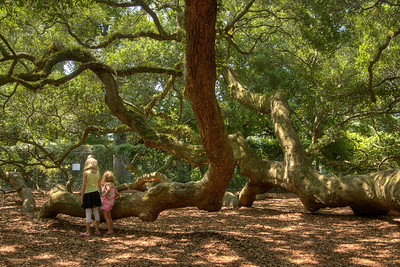 Two young girls explore the enormous branches of the Angel Oak Tree, located inside the Angel Oak Park, in John's Island, SC on Tuesday, July 8, 2014. Copyright 2014 Jason Barnette  The tree and park is owned and operated by the City of Charleston. The tree is believed to be at least 400 years old, and might be as many as 1500 years old. The park is gated and secured during closed hours, and includes a gift shop and picnic tables for visitors during operating hours.