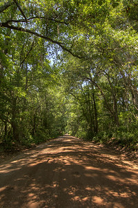 The dirt road leading to the Angel Oak Tree, located inside the Angel Oak Park, in John's Island, SC on Tuesday, July 8, 2014. Copyright 2014 Jason Barnette  The tree and park is owned and operated by the City of Charleston. The tree is believed to be at least 400 years old, and might be as many as 1500 years old. The park is gated and secured during closed hours, and includes a gift shop and picnic tables for visitors during operating hours.