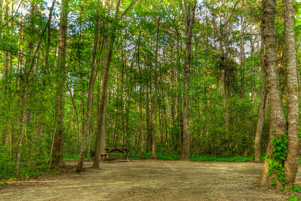 A shaded campground lot at Myrtle Beach State Park in Myrtle Beach, SC on Saturday, April 14, 2012. Copyright 2012 Jason Barnette