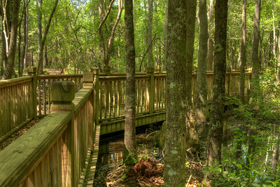 A wooden boardwalk crosses a swampy area near Hole #7 at the Socastee Recreation Park Disc Golf Course in Myrtle Beach, SC on Friday, April 24, 2015. Copyright 2015 Jason Barnette  This disc golf course is 18-holes of fun at a small, secluded community park. The first nine holes wind through a dense coastal forest of towering pine trees, while the back nine practically float in a watery swamp.
