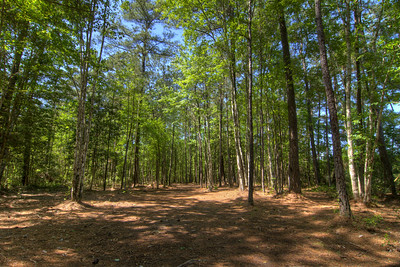 Long, beautifully wooded fairway at Hole #3 at the Socastee Recreation Park Disc Golf Course in Myrtle Beach, SC on Friday, April 24, 2015. Copyright 2015 Jason Barnette  This disc golf course is 18-holes of fun at a small, secluded community park. The first nine holes wind through a dense coastal forest of towering pine trees, while the back nine practically float in a watery swamp.