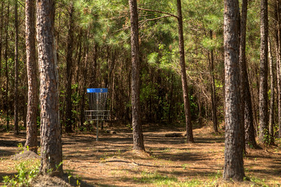 Open fairway surrounded by towering trees at Hole #5 at the Socastee Recreation Park Disc Golf Course in Myrtle Beach, SC on Friday, April 24, 2015. Copyright 2015 Jason Barnette  This disc golf course is 18-holes of fun at a small, secluded community park. The first nine holes wind through a dense coastal forest of towering pine trees, while the back nine practically float in a watery swamp.