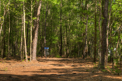 Woodsy area surrounding the basket at Hole #9 at the Socastee Recreation Park Disc Golf Course in Myrtle Beach, SC on Friday, April 24, 2015. Copyright 2015 Jason Barnette  This disc golf course is 18-holes of fun at a small, secluded community park. The first nine holes wind through a dense coastal forest of towering pine trees, while the back nine practically float in a watery swamp.