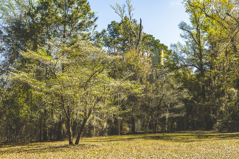 Poinsett State Park in Wedgefield South Carolina