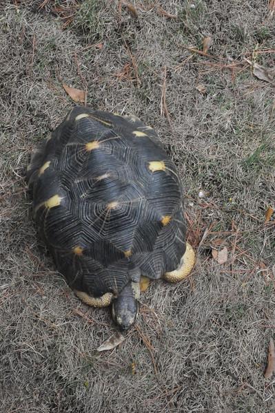 Overhead shot of tortoise