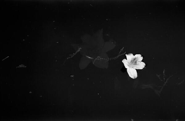 3-31-2012 Glencairn Garden in Black and White 3