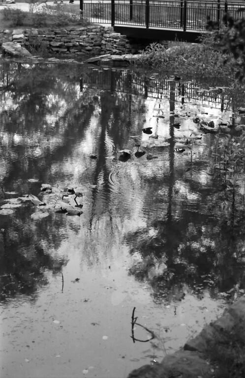 3-31-2012 Glencairn Garden in Black and White 1