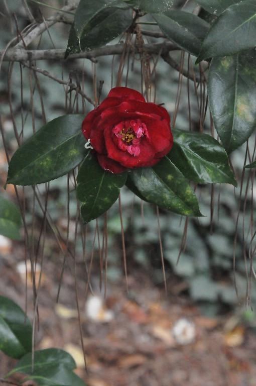3-31-2012 Glencairn Garden in Color