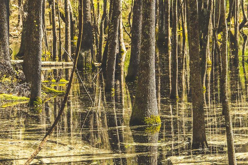 Santee State Park in Santee South Carolina