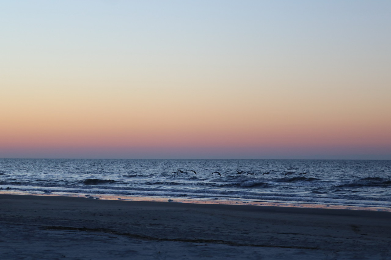 Birds Search the Surf as Sunrise Breaks