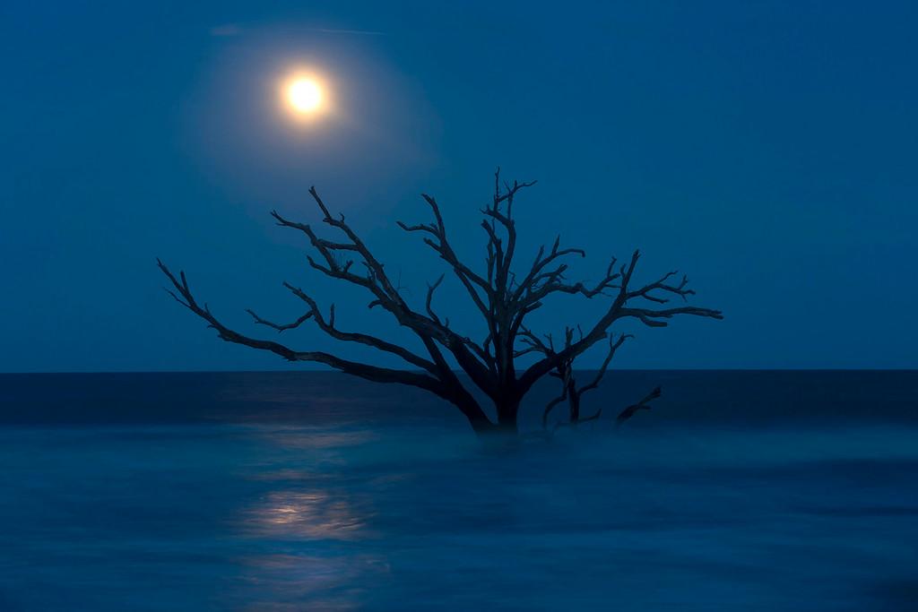 Botany Bay Reflection