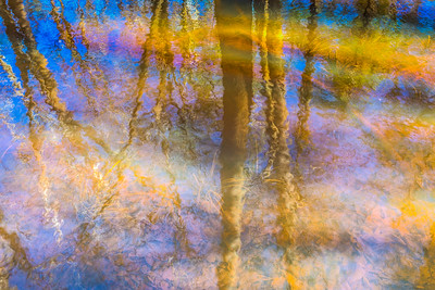 Reflections in Swamp, Congaree National Park, South Carolina