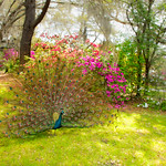 Beautiful bird in the blooming garden