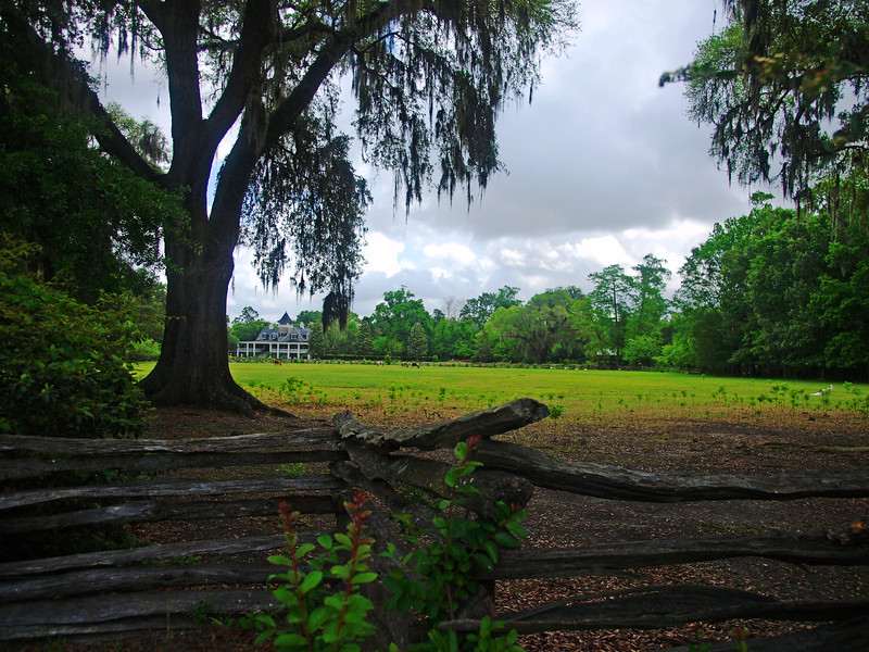 Magnolia Plantation and Gardens | Charleston, SC