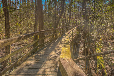 Pathway through swamp at Congaree National Park in South Carolina