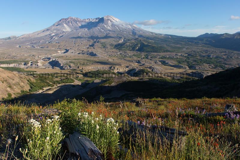 Mt St Helens Johnston Ridge 229