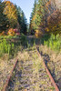 Railroad Tracks in Autumn 20