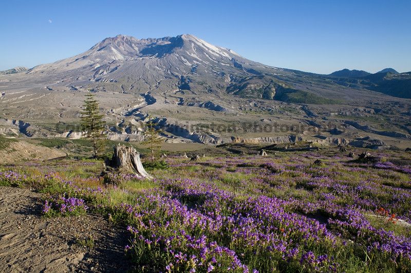 Mt St Helens Johnston Ridge 101