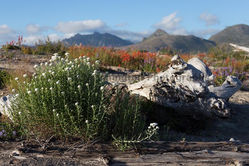 Mt St Helens Johnston Ridge 225