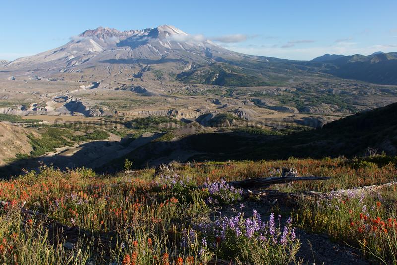 Mt St Helens Johnston Ridge 231
